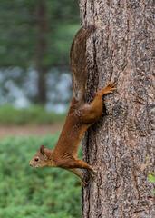 Écureuil malicieux
