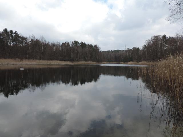 Einsamer Weiher im Wald