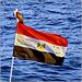 Sharm el Sheikh :  un falco pellegrino sull'asta della bandiera egiziana