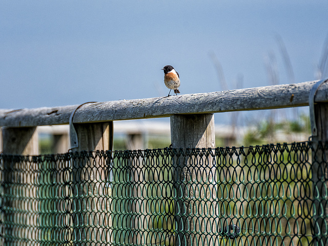 HFF - sent by European (although in Britain) Stonechat ;-)