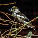 20170527 1709CPw [D~LIP] Vogelpark Detmold-Heiligenkirchen
