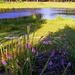 Garden of Eden............(Kieferen see)