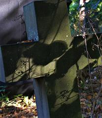 Shadows And Dapples