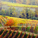 autunno tra le vigne
