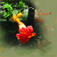 Trumpet Vine