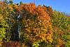 Déclinaison de tons d'automne