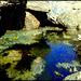 Rock pool, Porthcadjack. For Pam.