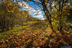 Autumn Joy!