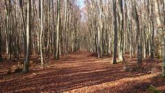 im tiefen, tiefen Novemberwald