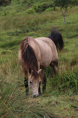Grazing in the tall grass