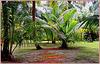 Seychelles : Praslin , un parco perfetto per turisti e tartarughe giganti