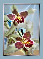 Orchids. UdoSm