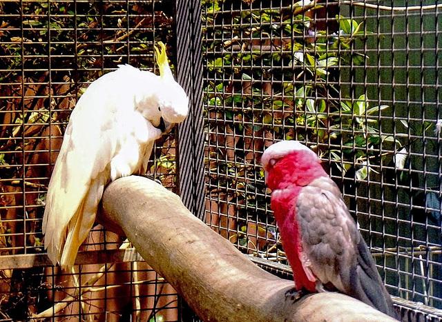 Featherdale Zoo, Sydney