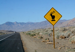 How the Tule Elk Came to Owens Valley