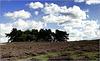 Dutch August Landscape...