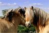 Horse Love...
