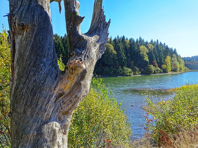 Blick vom alten Pfauenteich auf den Damm des Hirschler Teichs