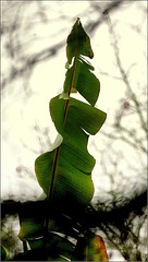 Dur pour les feuilles