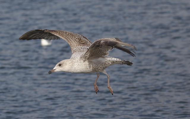Seagull EF7A9799