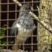 20170527 1723CPw [D~LIP] Vogelpark Detmold-Heiligenkirchen