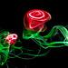 Roses dansantes