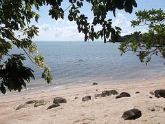 Feuillage de plage / Strandlaub
