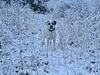 Branco in the snow