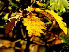 Un automne en or / A golden autumn [ON EXPLORE]