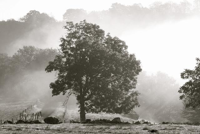 Arbre et légère brume