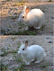 Ce matin ... un lapin ...
