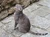 Una gatta ...