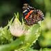 Schmetterling - 20150815