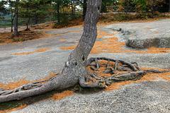 Growing in granite (Explored)