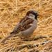 Sparrow z3