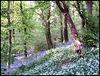 spring flowers in Budshead Wood