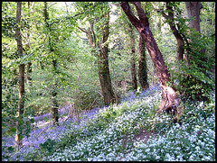 spring flowers in Budshead Wood