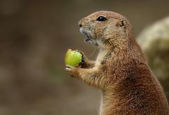 elle est bonne ma pomme