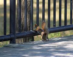 hff pour l'écureuil effrayé