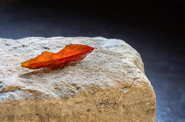Baiser d'automne IMGP3106