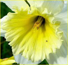 Cœur citron (VOIR NOTE)