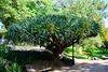 Lisbon 2018 – Tree in the Jardim da Estrela
