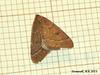 1960 Theria primaria (Early Moth) - 3090u
