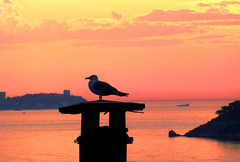 TR - Istanbul - Büyükada Sunset