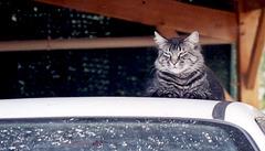 Sur le toit de ma voiture je trône