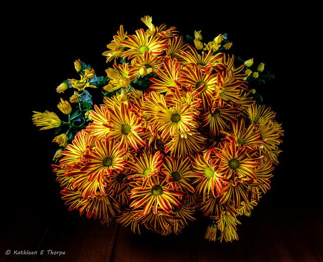 Chrysanthemum Grandiflorus 001-1