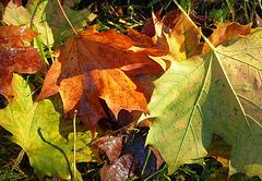 Belated Autumn Colour 1