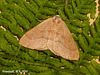 1962 Hylaea fasciata (Barred Red)
