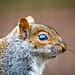 Squirrel profile2