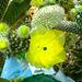 Blühender Kaktus - floranta kakto