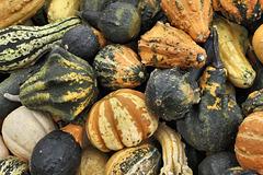 Autumn Gourds – Marché Jean-Talon, Montréal, Québec, Canada